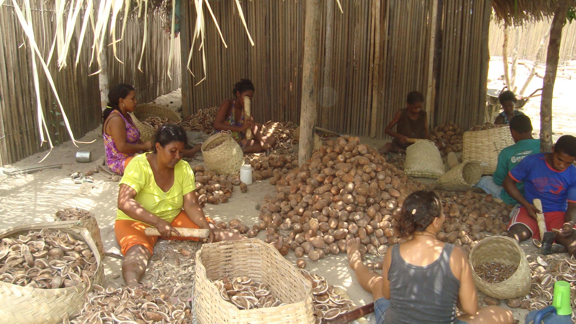 Verarbeitung von Babaçu-Nüssen in Brasilien